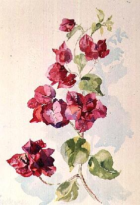 No.2 Bougainvillea Red (w/c)