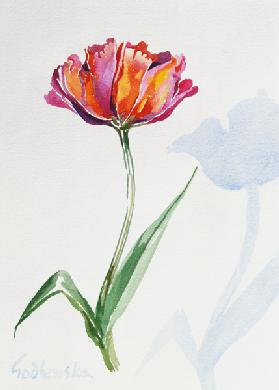 Tulip, 1998 (w/c on paper) (see also 124446 & 124448)