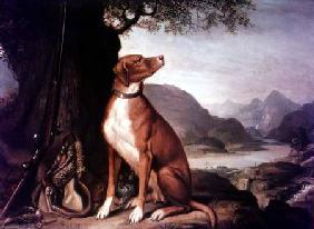 G. M. Johnston's favourite gun dog in a landscape