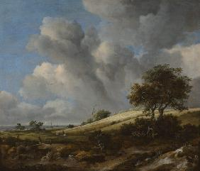 van Ruisdael, Jacob Isaacksz : A Cornfield with the Zuide...