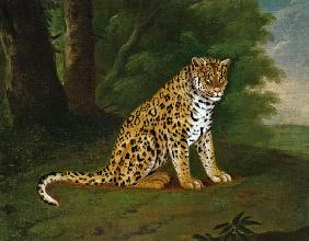 Agasse, Jacques-Laurent : A Leopard in a landscape