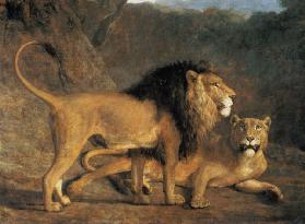 Lion and lioness in the Exeter Menagerie