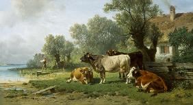Guardian boy with cows on the sea shore