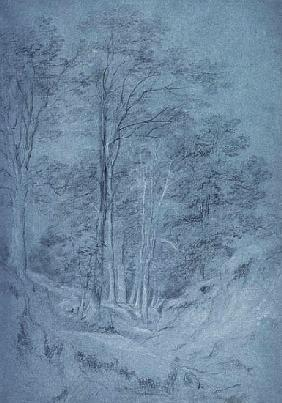 Study of ash and other trees (pencil on paper, heightened with white chalk)