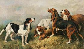 Hounds with a Hare