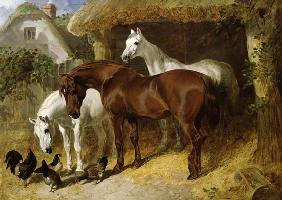Horses and chickens on a farm