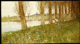 Poplars and narcissi at a channel