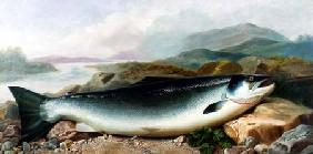 Still Life of a Salmon on a Riverbank in a Mountainous Landscape