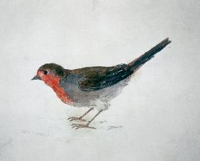 Turner, William : Robin, from The Farnley Bo...