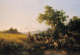 Italian landscape with ox cars during the grain harvest