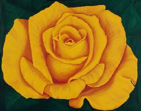 Yellow Rose Landora