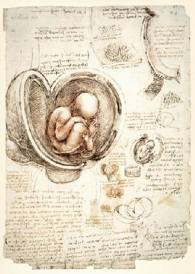 The Human Foetus in the Womb, facsimile copy  &