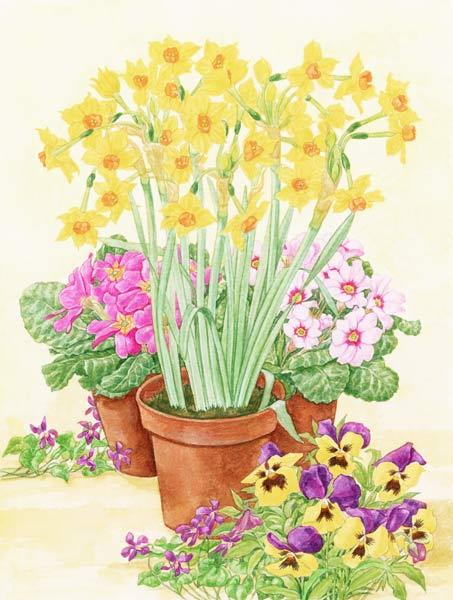 Pots of Spring Flowers, 2003 (w/c on paper)