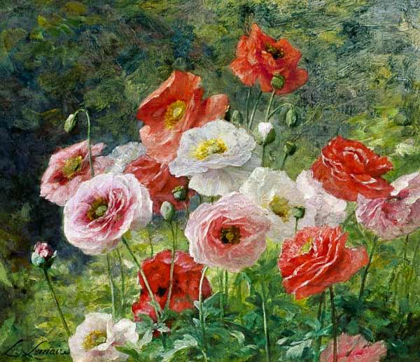 Lemaire, Louis Marie : Cluster of Poppies