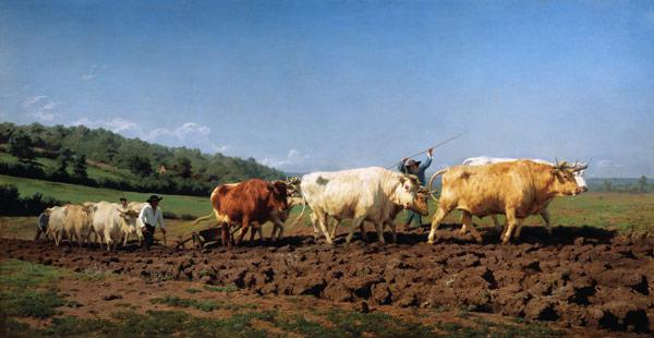 Ploughing with oxen in the Nivernais.