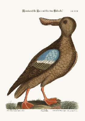 The Blue-wing Shoveler