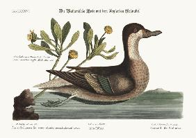 The Ilathera Duck