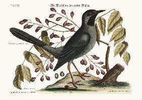 The red-legged Thrush