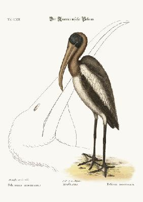 The Wood Pelican
