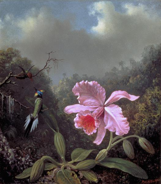 Still Life with an Orchid and a Pair of Hummingbirds