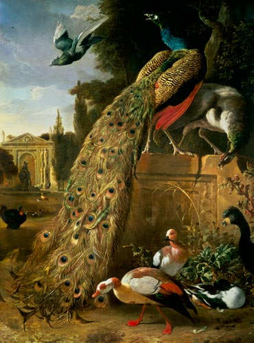 Peacock And A Peahen On A Plinth With D Melchior De