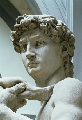 David, detail of the head by Michelangelo Buonarroti (1475-1564)