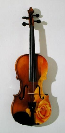 The Rose of Violin