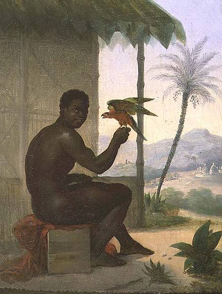 Brazilian Negro With Tropical Bird Nicolas Antoine