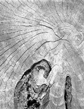 Close up of tree trunk (b/w photo)