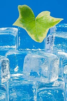 Ivy leaf and ice