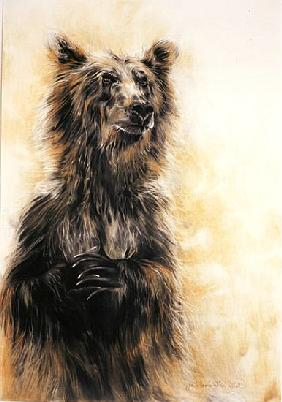 Grizzly Bear 1, 2002 (carbon pencil, charcoal & chalk)