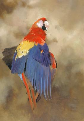 Parrot, 2000 (acrylic and pencil crayon on canvas)