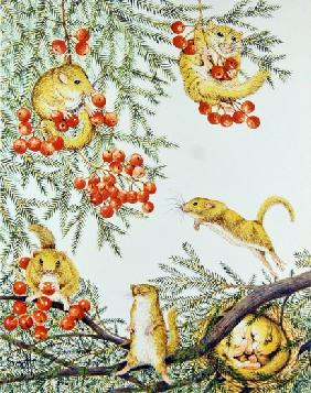 Dormouse House Party