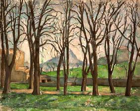 Chestnut trees at the Jas de Bouffan