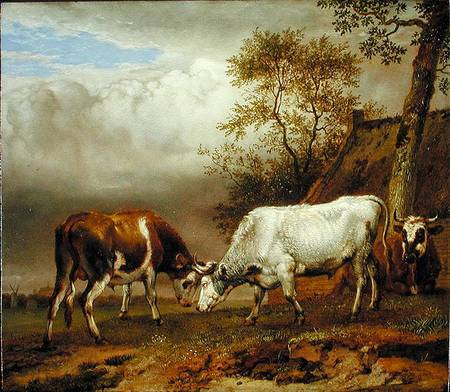 Two Bulls With Locked Horns Paulus Potter As Art Print
