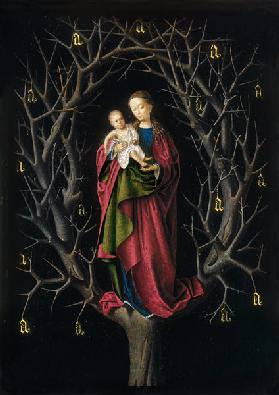 The Virgin of the dry Tree