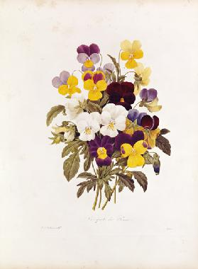 A federation of pansies
