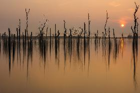 drowned forest ...........