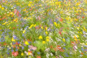 Summer field flowers..........