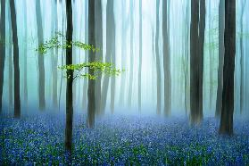 the blue forest ........