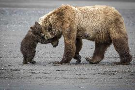 A Little Bear Hug