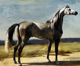 Thoroughbred horse in a landscape.