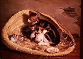 Cat with Her Kittens in a Basket