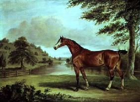 Bay Hunter in a Wooded Landscape with River
