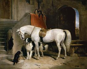 Landseer, Sir Edwin Henry : Prince George's Favorites.