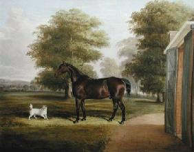 A Bay Horse with a Terrier
