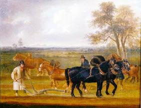 Cruckton ploughing match with four teams of horses