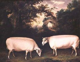 Two Prize Border Leicester Rams in a Landscape