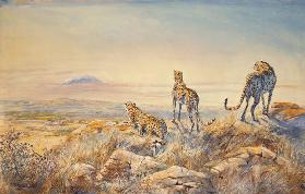 Cheetah with Kilimanjaro in the background, 1991 (w/c)