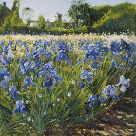 Above the Blue Irises (oil on canvas)